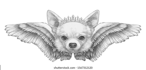 Portrait of Chihuahua with wings. Hand drawn illustration.