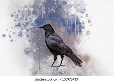 Portrait of a Crow bird, watercolor painting. Bird illustration