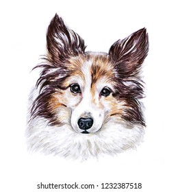 Portrait cute dog isolated on white background. Watercolor hand-drawn illustration. Popular breed dog.