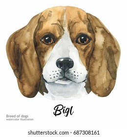 Portrait cute dog isolated on white background. Watercolor hand-drawn illustration. Popular breed dog. Greeting card design. Bigl.