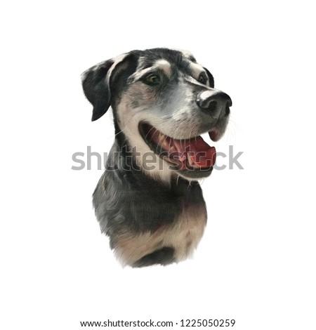 Portrait Dog Isolated On White Background Stock Illustration