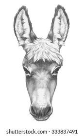 Portrait of Donkey. Hand drawn illustration.