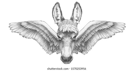 Portrait of Donkey with wings. Hand drawn illustration.