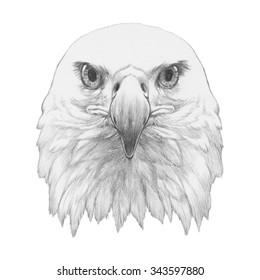Portrait of Eagle. Hand drawn illustration.