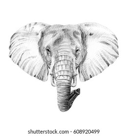 Portrait of elephant drawn by hand in pencil. Originals, no tracing