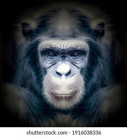 portrait of a gorilla in a zoo