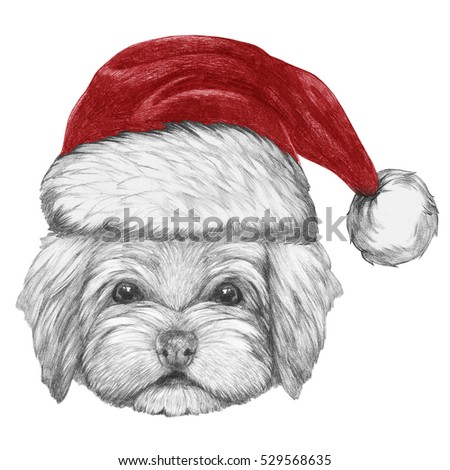 78ff58d68ccb7 Portrait Havanese Santa Hat Hand Drawn Stock Illustration 529568635 ...