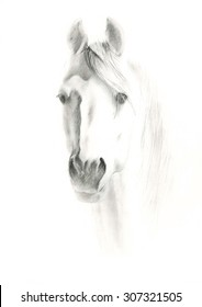 Portrait of horse on white background, by pencil painted