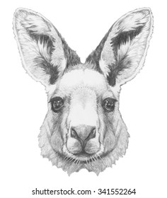 Portrait of Kangaroo. Hand drawn illustration.