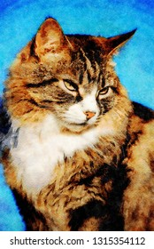 Portrait of a long haired tabby cat. Digital image with watercolour effect.