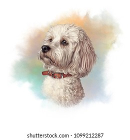 Portrait of Maltese Dog. Toy or Miniature Poodle on watercolor background. Cute puppy. Watercolor hand drawn pet illustration. Animal art collection: Dogs. Good for print T-shirt, pillow, cover, card