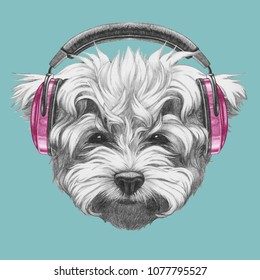 Portrait of Maltese Poodle with headphones,  hand-drawn illustration