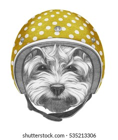 Portrait of Maltese Poodle with Helmet. Hand drawn illustration.