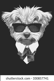 Portrait of Maltese Poodle in suit. Hand drawn illustration.