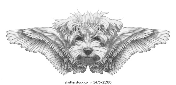 Portrait of Maltese Poodle with wings. Hand-drawn illustration.