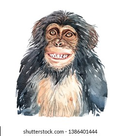 Portrait monkey smile. Watercolor hand drawn illustration.Watercolor chimpanzee layer path, clipping path isolated on white background.