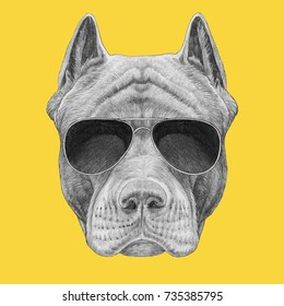 Portrait of Pit Bull with sunglasses. Hand-drawn illustration.