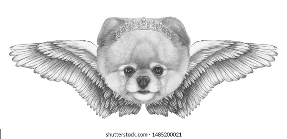 Portrait of Pomeranian with wings. Hand-drawn illustration.