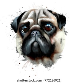 Portrait of a pug dog watercolor illustration isolated on white background closeup. Symbol 2018