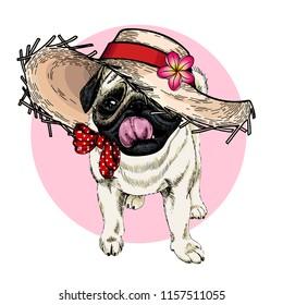 portrait of pug dog wearing straw hat, flower and polka dot bandana. Summer fashion cartoon illustration. Hand drawn pet portait. Poster, t-shirt print, holiday, postcard, summertime