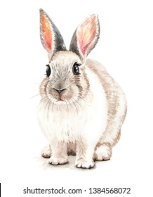 Portrait Rabbit Watercolor hand drawn illustration.Watercolor rabbit sitting layer path, clipping path isolated on white background.