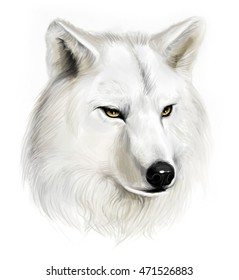 Portrait of realistic white wolf on the white background.