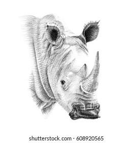 Portrait of rhino drawn by hand in pencil. Originals, no tracing