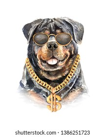 Portrait Rottweiler of a dog. Watercolor hand drawn illustration.Watercolor Rottweiler with sunglasses and dollar necklace layer path, clipping path isolated on white background.