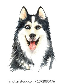 Portrait Siberian Husky of a dog. Watercolor hand drawn illustration layer path, clipping path isolated on white background.