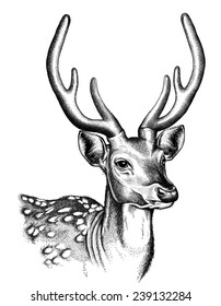 Portrait sketch of a Spotted Deer face in black and white.