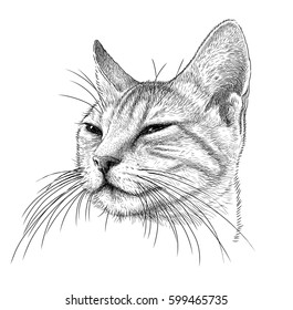 portrait of a sly cat