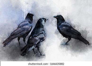Portrait of three Crow birds, watercolor painting. Bird illustration.