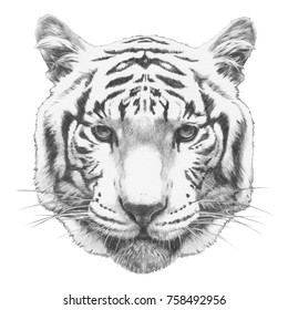 Portrait of Tiger with. Hand-drawn illustration.