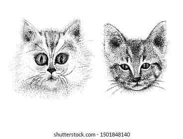 Portrait of two cute kitties. Drawn with black capillary pen.