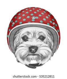 Portrait of Yorkshire Terrier with Helmet. Hand drawn illustration.
