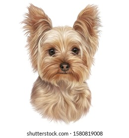 Portrait of Yorkshire Terrier isolated on white background. Lap dog. Cute puppy. Hand drawn illustration. Animal art collection: Dogs. Good for print T-shirt, cover, card. Art background for design