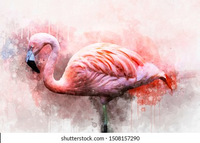 Portret of a Flamingo, watercolor painting. Red flamingo (Phoenicopterus ruber), zoological illustration, hand drawing.