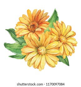 Poster, composition with orange Calendula officinalis flower (also known as the field, marigold, ruddles). Watercolor hand drawn painting illustration isolated on a white background.