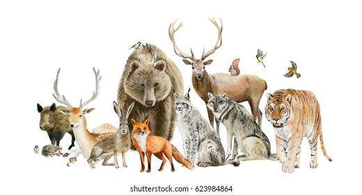Poster set group of watercolor hand drawn animal cliparts - birds, predators and preys, grass-feeding and rodents