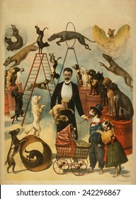 Poster for a trained dog act, probably one that performed in Vaudeville as an independent act. 1899.