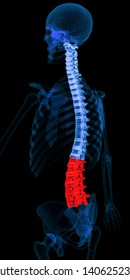 Posterior (back) 45 degree rotation (Posterior oblique 45) view of human spine in X-ray. Lumbar vertebrae (L1-L5) highlighted in red. Includes cervical, thoracic and lumbar vertebrae. 3D rendering