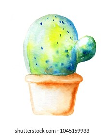 Potted cactus , watercolor painting isolated on white background. Green homeplant.