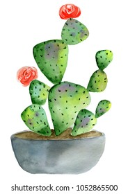 Potted cactus, watercolor painting isolated on white background. Green homeplant. Red roses buds on the edges, grey pot, visible ground