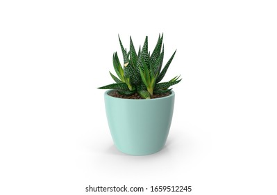 Potted Plant with shadow on white background,realistic 3D illustration.