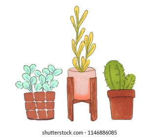 Potted plants isolated on white background. Hand-drawn illustration cactus and plants