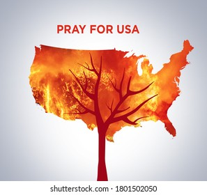 Pray for USA. America bush fire concept. Tree burned by bush fire. Many trees burned at clifornia. Save tree save the animal. Environment day concept.
