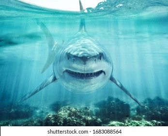 A predator great white shark swimming in the ocean coral reef shallows just below the water line closing in on its victim . 3d rendering with god rays