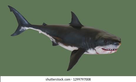 Predatory shark. 3d illustration