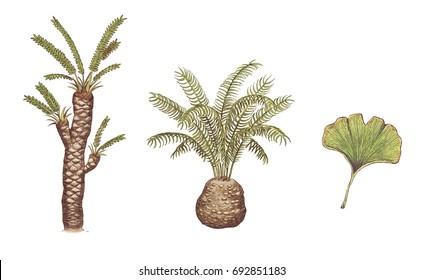 Prehistoric plants - Ginkgo leaf, Williamsonia gigas, Cycadeoidea gigantea - realistic scientific color illustrations, white (no background)