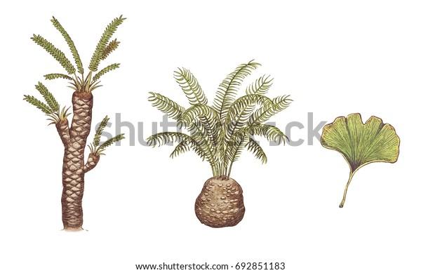 dating vanhoja fossiileja